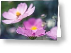 Cosmos Sensation - Fiori Rosa Greeting Card