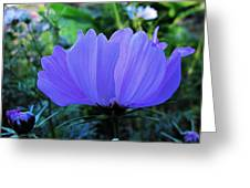 Cosmos Side Greeting Card