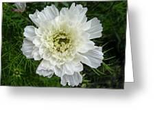 Cosmos Variety Greeting Card