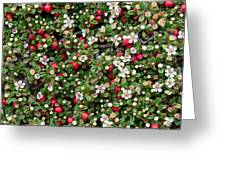 Cotoneaster Bush Background Greeting Card