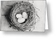 Cottage Bird's Nest In Black And White Greeting Card