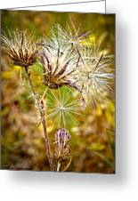 Cotten Grass Greeting Card