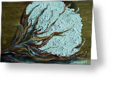 Cotton Boll On Wood Greeting Card by Eloise Schneider