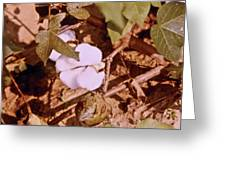 Cotton Bolls Greeting Card