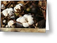 Cotton Bolls Ready For Harvest Greeting Card