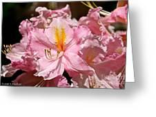 Cotton Candy Azalea Greeting Card