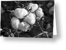 Cotton Greeting Card