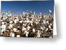 Cotton Fields Greeting Card