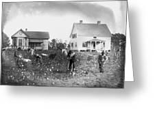 Cotton Picking, 1902 Greeting Card