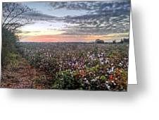 Cotton Sunrise  Greeting Card by JC Findley
