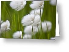 Cottonsedge Greeting Card