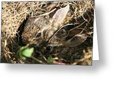 Cottontail Kits Greeting Card