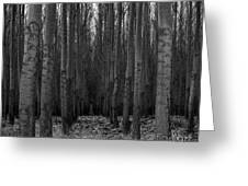 Cottonwood Alley Monochrome Greeting Card