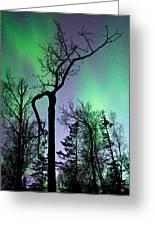 Cottonwood Aurora Greeting Card
