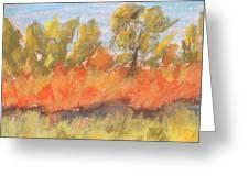 Cottonwood Grove Greeting Card by Steve Jorde