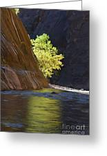 Cottonwood On The Virgin River Greeting Card