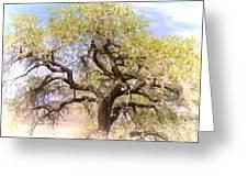 Cottonwood Tree Digital Painting Greeting Card