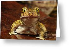 Couchs Spadefoot Toad Greeting Card