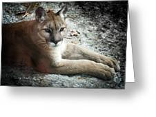 Cougar Country Greeting Card