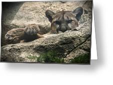 Cougar Spotted Me Greeting Card