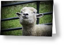 Counting Sheep Greeting Card