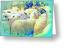 Counting The Sheep But Can't Sleep  Greeting Card