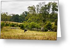 Country Beauty Greeting Card