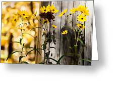 Country Daisy Greeting Card