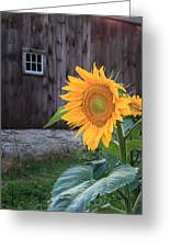 Country Flower Greeting Card