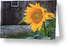 Country Flower Square Greeting Card