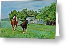 Country Horses Greeting Card