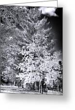 Country Trees Greeting Card