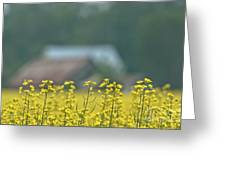 Country Yellow Greeting Card