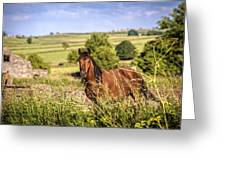 Countryside Horse Greeting Card