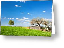 Countryside Landscape During Spring With Solitary Trees And Fence Greeting Card