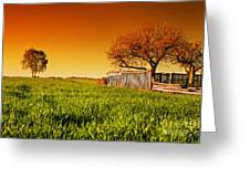 Countryside Orchard Landscape At Sunset. Spring Time Greeting Card