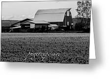 Countryside Tulip Farm Greeting Card