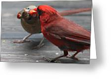 Courting Cardinal Greeting Card