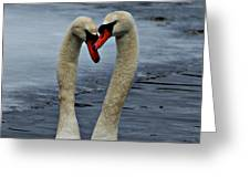Courting Swans Greeting Card