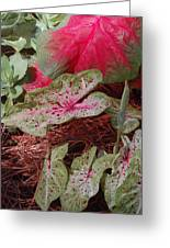 Courtyard Caladium Greeting Card