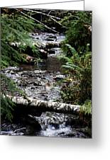Covell Creek 1 Greeting Card