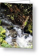 Covell Creek 4 Greeting Card