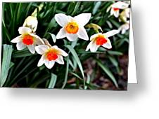 Covenant Daffodils Greeting Card