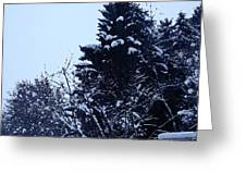Covered Snow Trees Greeting Card