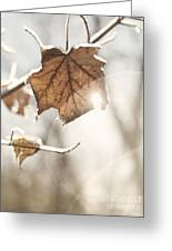 Covered With Ice Maple Leafe On A Sunny Day Greeting Card