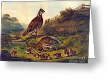 Covey 1856 Greeting Card
