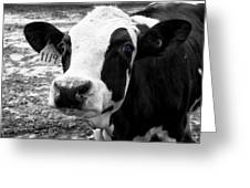 Cow 1119 Greeting Card