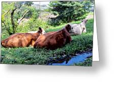 Cow 6 Greeting Card