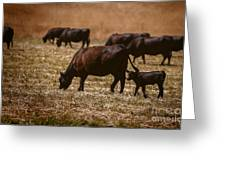 Cow And Calf Grazing Greeting Card