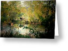 Cow By The Pond Greeting Card
